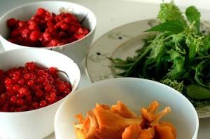 L'ortie biologique plante excellente pour la santé