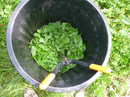 Recettes d ortie bio ortie bio antioxydant bio - Purin de prele ...