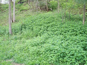 Biotope ecosystème de l'ortie