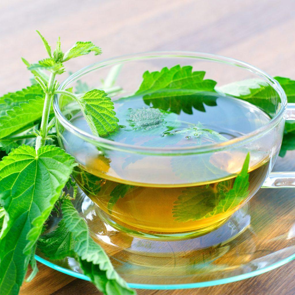 Une infusion naturelle d'orties bio pour lutter contre les baisses de régime...